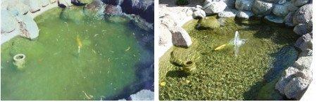 amoniako-ir-tersalu-tvenkiniuose-pasalinimas-ceolito-pagalba1