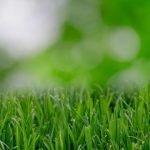 ceolitas-vejos-rengimo-drenazine-medziaga-substratas-ir-dirvos-kondicionierius